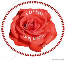 photograph of red valentine rose