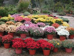 arkansas ornamental plant resources