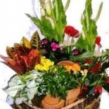 pittsburgh florists pittsburgh florist flower delivery by blooms