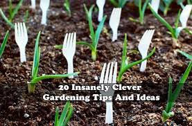 Garden Tips And Ideas 20 Insanely Clever Gardening Tips And Ideas Jpg