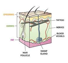tattoo pain explanation when talking about tattoos this is a great explanation as to why