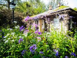 how to create a cottage garden using indigenous south african plants