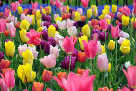 learn how to plant and care for your flower bulbs