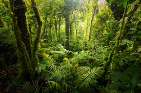 5 Dominant Plants In The Tropical Rainforest Rainforest Weather U0026 Climate Sciencing