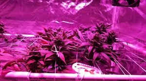 1000 watt led grow light reviews higrow 1000 watt grow light review youtube