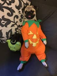 pug halloween costume for baby proud mama gives her pug u0027s little house an adorable halloween makeover