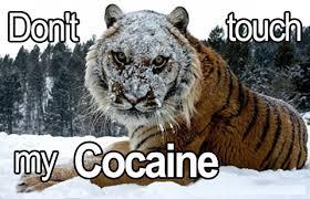 Bear Cocaine Meme - image 670885 cocaine bear know your meme