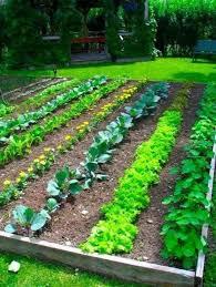 2993 best gardening images on pinterest vegetable garden plants
