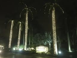 how to wrap christmas lights around a tree how to wrap a palm tree with christmas lights christmas lights fia
