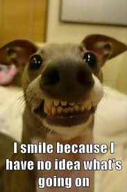 Keep Smiling Meme - just keep smiling giggle pinterest funny animal pictures