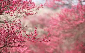 pink flower pink flower wallpaper 17813 1920x1200 px hdwallsource