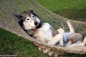 dog hammock funnydogsite com