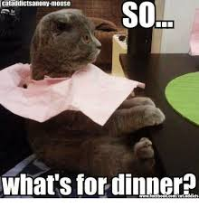 Whats For Dinner Meme - cataddictsanony mouse so sol what s for dinner meme on me me