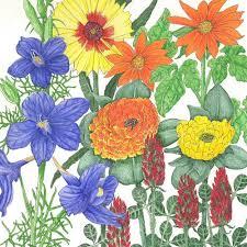 butterfly garden wildflower mix pack