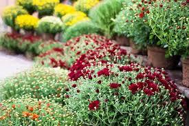 fall gardening seasonal flowers toxic to pets vets toronto