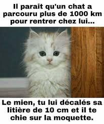 Meme Chat - il parait qu un chat a parcouru plus de 1000 km pour rentrer chez
