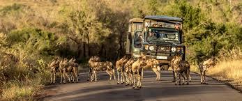 safari full day hluhluwe umfolozi safari