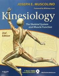 kinesiology the skeletal system and muscle function 2e amazon