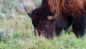 Wyoming wild animals images Wildlife viewing travel wyoming that 39 s wy jpg