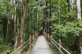 Botanical Garden Bellevue Bellevue Botanical Garden Ravine Experience Picture Of