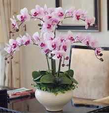 artificial orchids orchid phalaenopsis real touch flower with leaves artificial