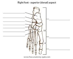 Foot Surface Anatomy Free Anatomy Quiz The Bones Of The Foot Dorsal Aspect Image