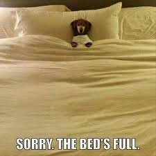 Dog In Bed Meme - 38 dog bed hogs photo gallery dog beds dog and puppys