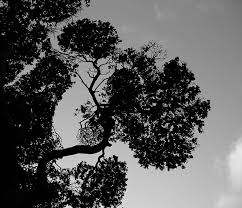 stylish tree branches in silhouette free stock photo