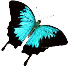 46 butterfly butterfly hd images ie wallpapers gallery