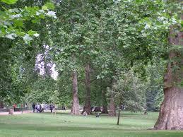 plane trees usage