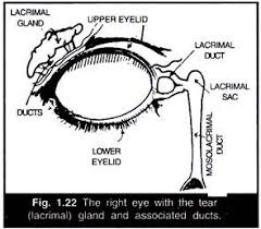 essay on eye structure working and defects