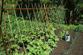 how to start a vegetable garden harvest to table
