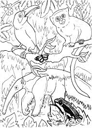 free colouring pages of rainforest animals coloring pages of
