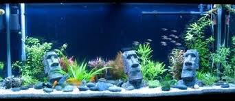 aquarium sure beats worksure beats work