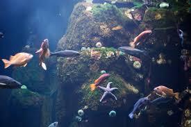 Oregon snorkeling images North america aquarium diving madurodive blog jpg