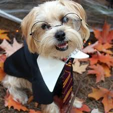 Halloween Costume Ideas For Pets 9 Best Dog Costumes Images On Pinterest Halloween Party Pet