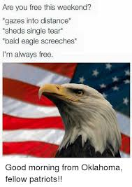 Patriotic Eagle Meme - are you free this weekend gazes into distance sheds single tear