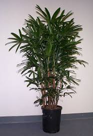Indoor Plants by Indoor Plants Exotic Plants