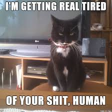 Getting Real Tired Meme - i m getting real tired of your shit human meme on imgur