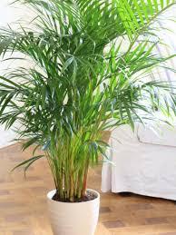 trendy shade house plants 126 shade tropical house plants