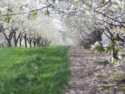 Breathtaking Small Backyard Orchard Photo Design Inspiration - Backyard orchard design