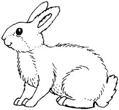 peter rabbit clipart coloring