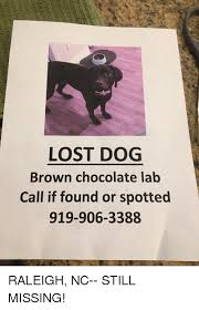Lost Dog Meme - lost dog brown chocolate lab call if found or spotted 919 906 3388