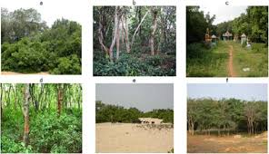 Tropical Dry Forest Animals And Plants - tropical dry evergreen forests of peninsular india ecology and
