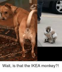 Ikea Monkey Meme - wait is that the ikea monkey ikea meme on me me