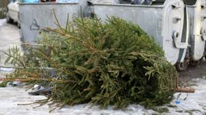 allentown set to begin christmas tree pickup drop off wfmz