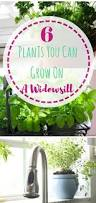 6 plants you can grow on a windowsill gardens gardening for