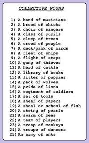 collective nouns worksheet literacy pinterest collective