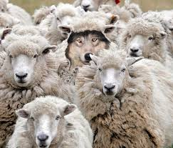 carson you can t hide in a sheep skin we see the wolf you are no