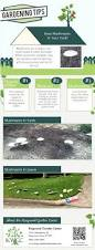 7961 best all of the mushroom growing tips images on pinterest